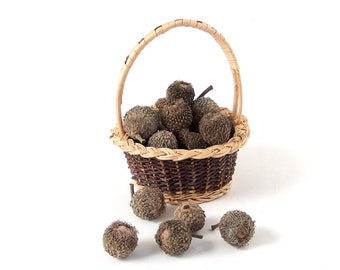 Large Fringed Whole Baked Acorns, 60
