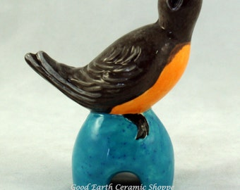 Pie Bird - Spring Robin