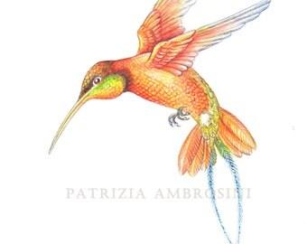Original 7x9 Watercolour Hummingbird No.12 . NOT A PRINT ..Original Painting