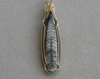 Orthoceras Fossil Pendant in 14K Gold-Filled Wire Wrap Setting