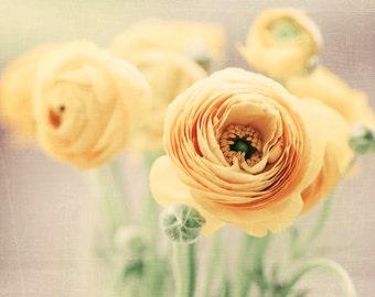Ranunclus Flowers, Yellow Decor, Floral Still Life, Nature Photography, Yellow Ranunculus Art, 8x10, 11x14, 16x20