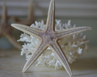 Dried Royal Starfish - Preserved Starfish - Beach Decor