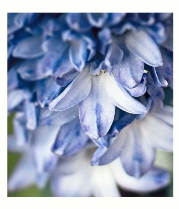 Blue Petals, Fine Art Photography, Flowers, Blues, Home Decor, Wall Art, Cottage Style