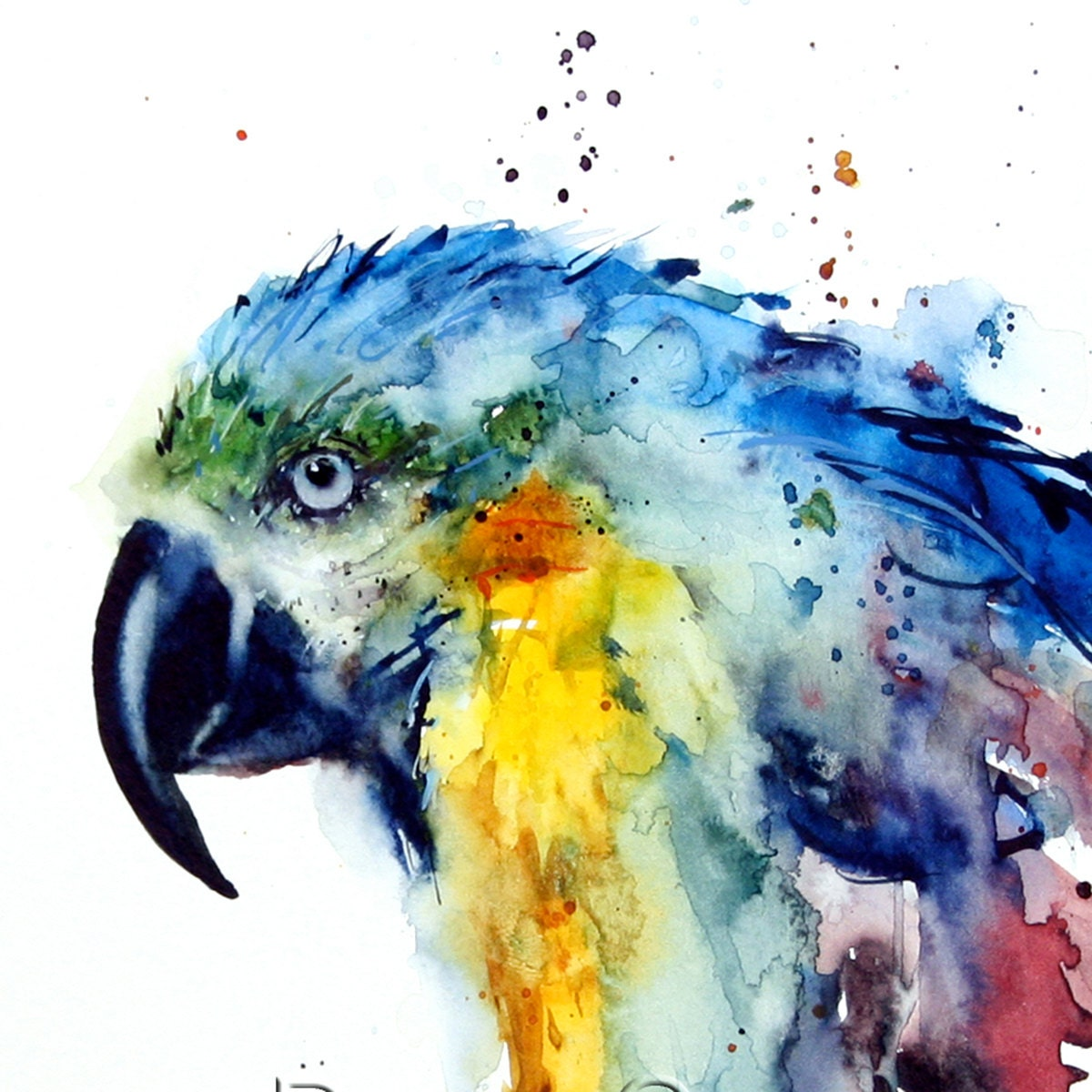 Macaw Watercolor Print By Dean Crouser