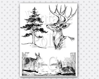 Clip Art Woodland Deer Fawn Pine Tree Forest Family Digital Collage Sheet Clipart Graphics Printable Digital Instant Download