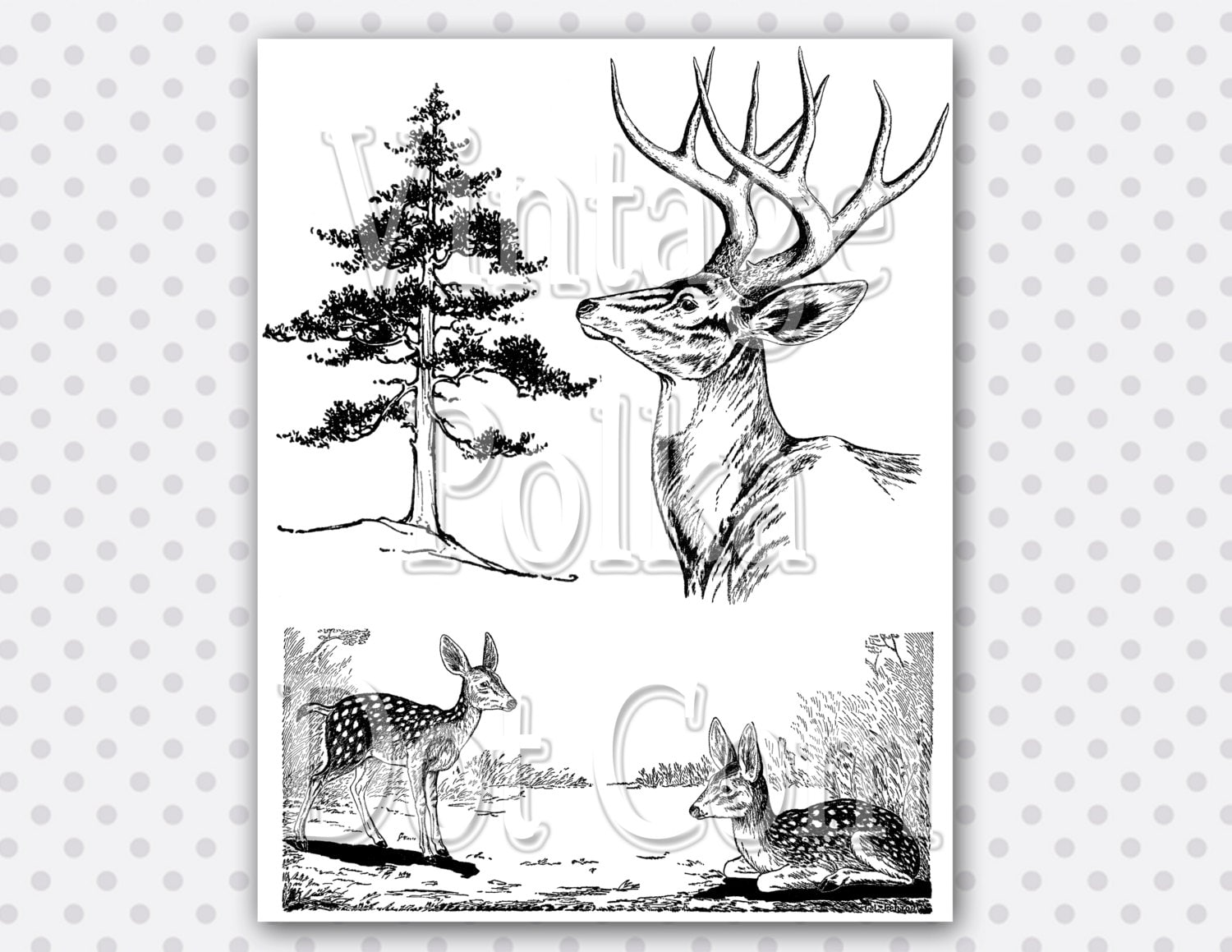 Clip Art Woodland Deer Fawn Pine Tree Forest by ...