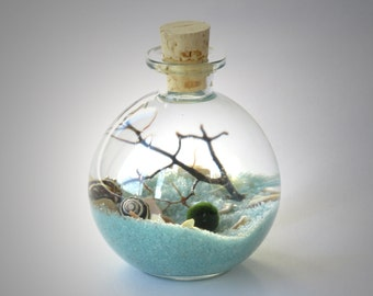 Marimo Bottle Garden Terrarium Kit by Midnight Blossom - Underwater Terrarium with living japanese moss ball, sand, pebbles and sea fan.