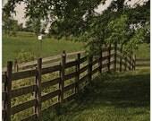 Farmland photography, Virginia, fence row, trees, 11x14 fine art print