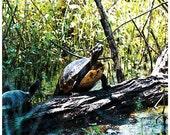 Nature Photograph, turtles, Louisiana, green room art, turtle photography, fine art print
