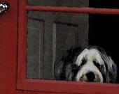 Bearded Collie Card, Animal  Photography,Fine Art Photograph,Photo Card, Handmade Card, Pet Portrait,