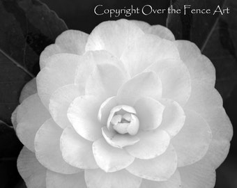 Fine Art Photography Nature Photography Black and white Flower Card White Gardenia