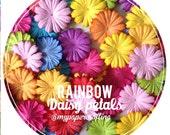 Mixed rainbow daisy Petals / pack