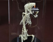 "real rat skeleton mounted in glass dome with base,named ""marry me"",just for Meghan ondo"