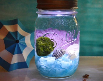 Nightlight Beach Terrarium Kit ~ Marimo Moss Ball Aquatic Terrarium ~ Ball Mason Jar with Solar Powered Lid ~ Beach Decor ~ Gift Idea