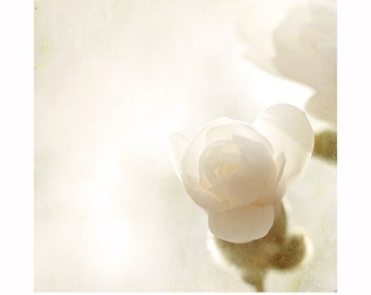 White Magnolia photo, pale magnolia print, flower photography, spring, neutral art print, fine art soft  blossom, floral