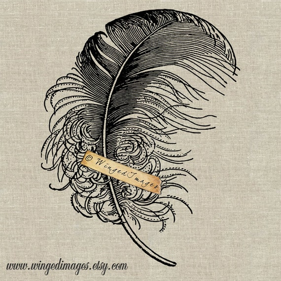 Feather Instant Download Digital Image No.94 Iron-On Transfer to Fabric (burlap, linen) Paper Prints (cards, tags)