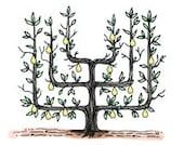 Espalier Parterre Cordon Topiary Pear Tree Formal Garden Boxwood - Digital Image - Vintage Art Illustration -  Instant Download