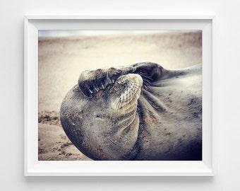 "Hawaiian Monk Seal Photograph Unframed / Kauai Hawaii purple grey dreamy sand beach beachy cottage sea side photography print / ""Face Palm"""