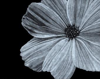 Original Illustration - Cosmos - Black and White - Floral - Colored Pencil