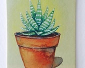 Succulent Original Watercolor Painting ACEO