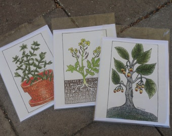 3 Pack Hand Drawn Cards Marjoram Mustard Seed and Nutmeg Plants