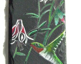 Hummingbird with Fuchsia
