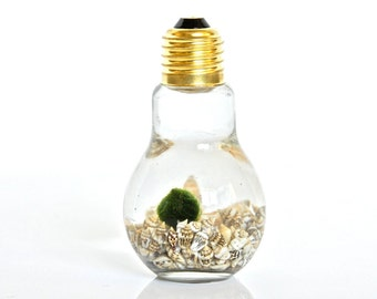 Light up Your Day! Marimo Moss Ball Light Bulb Decor, Christmas Gifts for Him, Christmas Gifts for Her, Christmas Gifts for Mom, Plant Decor