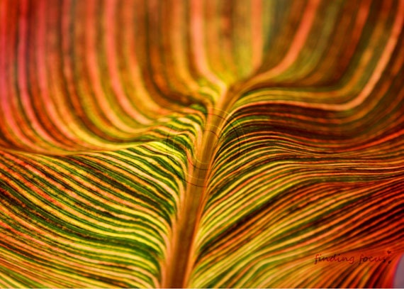 Abstract Leaf Nature Photography, Lines Stripes Red Yellow Orange Green Tropicana Warm Autumn Tones Home Decor, Various Sizes Art Photograph