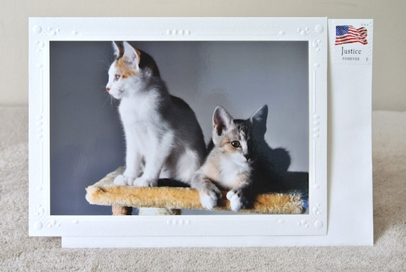 Sale Card Kitty Card & Postage Stamp Calico Kittens Cat Lover Animal Photography
