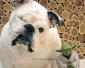 YODA and A Rescued ENGLISH BULLDOG, The Two Yodas, Star Wars, The Force, Funny Dog Photo, Children, Action Figure, Piper The Painting Dog