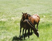 "horse photography print / nature art print / animal pair couple love art / green brown large wall art / ""Wild Horses of Little Bighorn"""