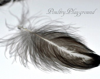 Feathers Black and White 2-3inches 50+count Crazy