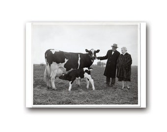 Greeting Card,Vintage Photo,A Formal Dinner, cow, calf,