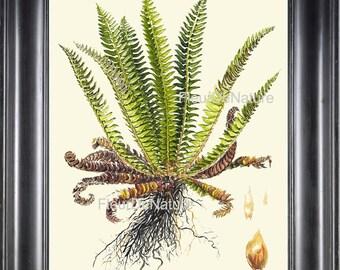 FERN PRINT Lindman 8X10 Botanical Art Print 22 Beautiful Green Fern Forest Summer Nature Home Decor Interior Design Antique Illustration