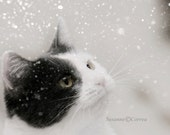 Snow Cat, art, photography, 8x8, home decor, snow, kitty, black, white