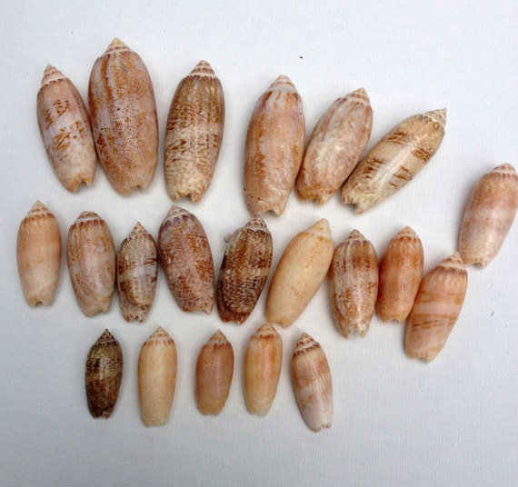 Basket Weaving Supplies Connecticut : Seashell crafts ct beach decor seashells natural