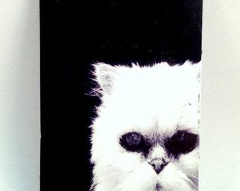 Evil Kitty Magnet