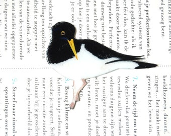 Hand- drawn and coloured Oyster Catcher brooch, bird brooch.