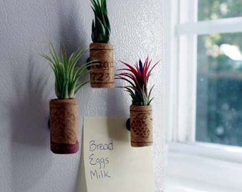 12 Pack Wine Cork Magnets with Air Plants - 30 Day Guarantee - Wedding Favors - Wholesale Air Plants - FAST SHIPPING