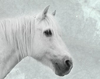 Horse art, equine art, horse photography, equine decor, shabby chic wall art, white, sepia, mint, green, aqua