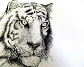 tiger, 11x17 pen and ink illustration, print, 2013