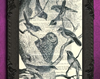 bird species print bird collection print black and white