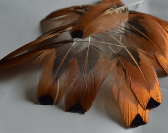 Brown pheasant feathers, stripped / Black tips