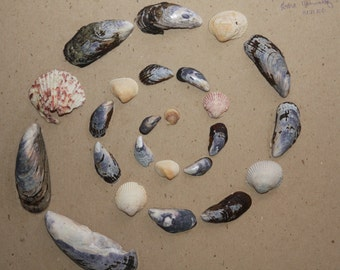 Brown and Blue Mussel Shells Spiral, Simple Sailors' Valentine Shell, Mandala Spiral Sea Shell Coastal Beach Wall Art
