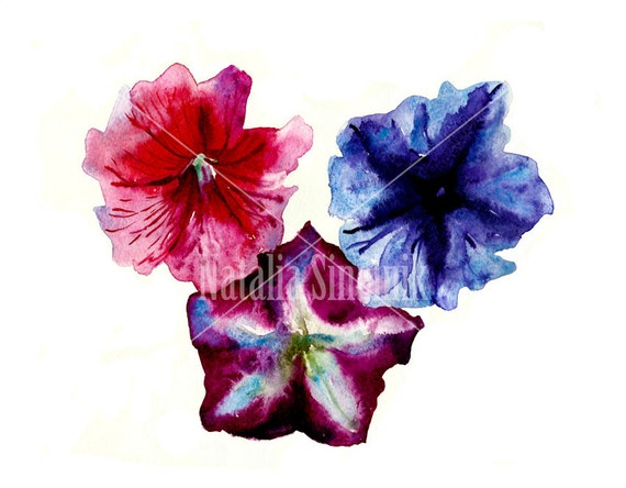 Three petunia flowers digital download original watercolor in red, white, purple and blue clipart, cottage chic style painting