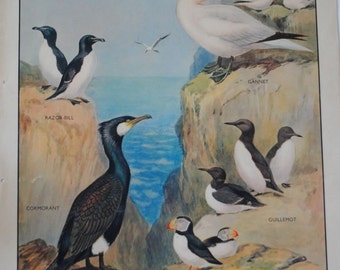 Vintage Macmillan School Poster: Birds of the Rocky Coast