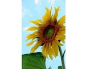 Sunflower Photograph - Nature Photography - Flower Fine Art Print - Beautiful Summer - Colorful Bright Wall Decor - Custom Sizes