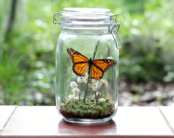Educational Gift for Children or Teachers, Science Present, Terrarium Kit in Glass Jar, Monarch Butterfly, Eco-Friendly, Nature, Outdoors