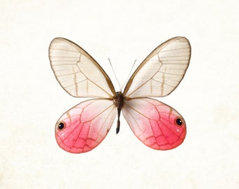 Ethereal Pink Butterfly Print - pink wings nature butterfly collector fine art photograph