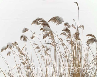 Pampas Grass Etsy